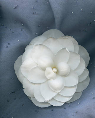 Saturday Night Camellia Poster by Marsha Tudor