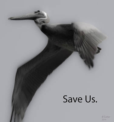 Save The Pelicans Poster by Betsy Knapp