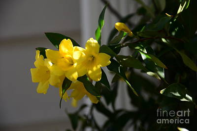 Sc Yellow Jessamine State Flower -georgia Poster by Adrian DeLeon