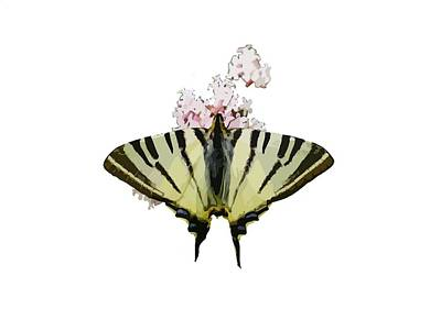 Scarce Swallowtail On Wild Garlic Flowers Vector Isolated Poster by Tracey Harrington-Simpson