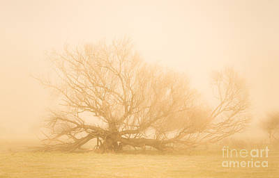 Scary Tree Scenes Poster by Jorgo Photography - Wall Art Gallery