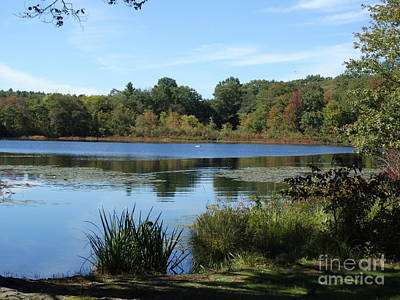 Scenic Lake Waban In Autumn Poster