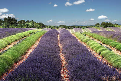 Scent Of Lavender Of Provence Poster by Any.colour.you.like Photography