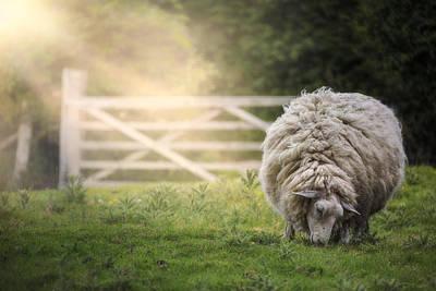 Sheep Poster by Joana Kruse