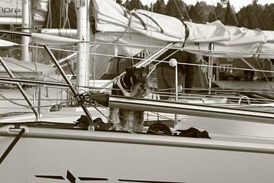 Schanuzer Dog On A Yacht - Monochrome Poster