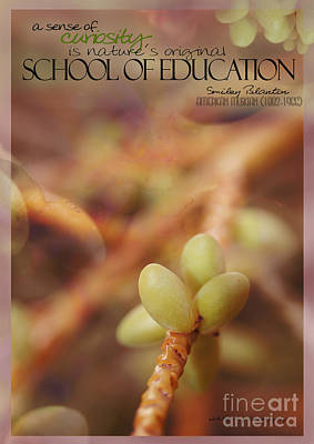 School Of Curiosity 08 Poster