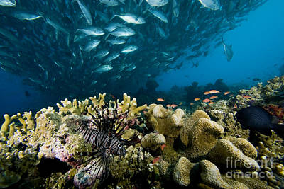 Schooling Fish Over Reef Poster by Dave Fleetham - Printscapes