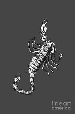Scorpio Zodiac Sign Vintage Tee Poster by Edward Fielding