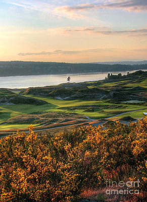 Scotch Broom -chambers Bay Golf Course Poster by Chris Anderson