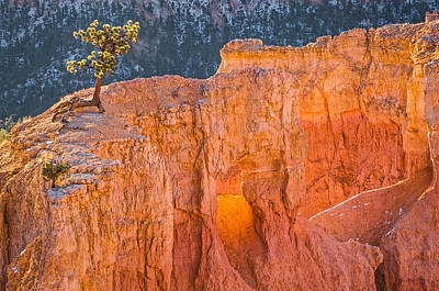 Scrappy Little Tree - Bryce Canyon National Park Photograph Poster by Duane Miller