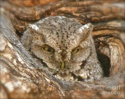 Screech Owl On Spring Creek Poster