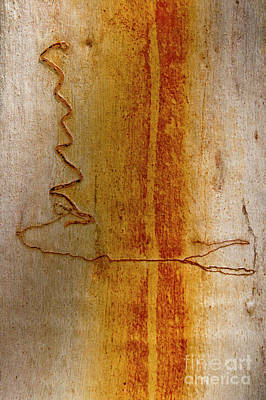 Poster featuring the photograph Scribbly Gum Bark by Werner Padarin