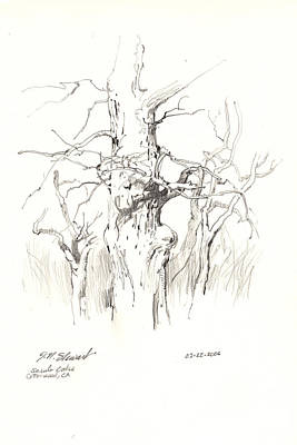 Poster featuring the drawing Scrub Oaks In Cottonwood by John Norman Stewart