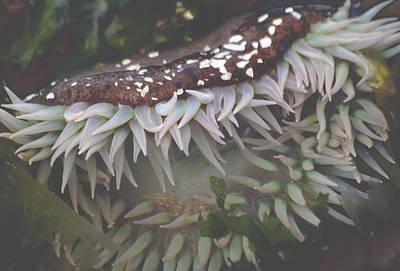 Sea Anemone Poster