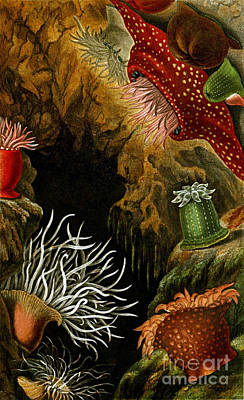 Sea Anemones, 1860 Poster by Biodiversity Heritage Library