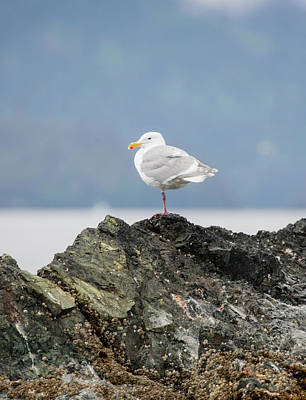 Sea Bird Perched On A Rock Poster