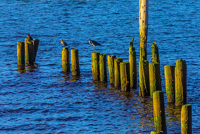 Sea Birds On Old Pier Posts Poster