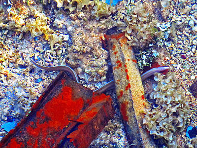 Sea. Corals. Rusty Iron And Little Moray.  Poster