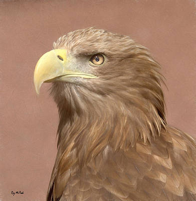 Sea Eagle Poster by Roy McPeak