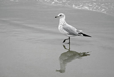 Sea Gull Walking In Surf Poster