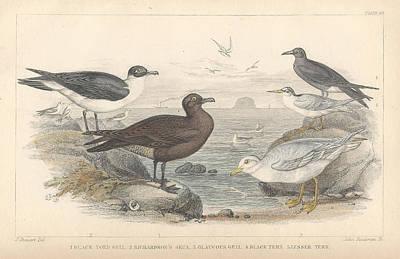 Sea Gulls Poster by Rob Dreyer