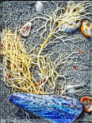 Sea Life Art By Sharon Cummings Poster