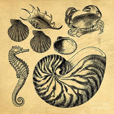 Sea Life Vintage Illustrations Poster