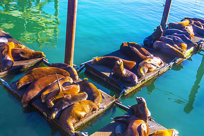 Sea Lions On Harbor Docks Poster by Garry Gay