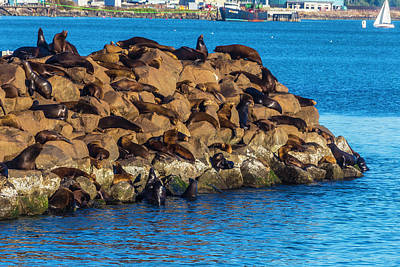 Sea Lions Sunning On Rocks Poster by Garry Gay