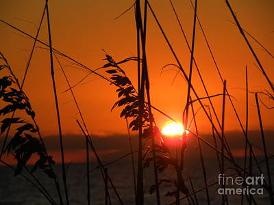 Poster featuring the photograph Sea Oats At Sunset by Terri Mills