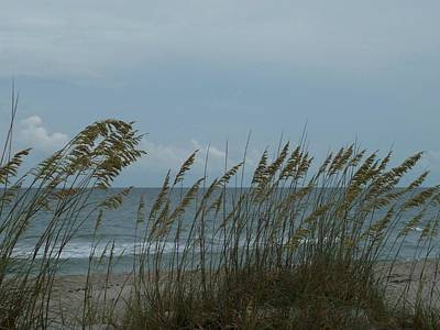 Sea Oats On Wrightsville Beach Poster