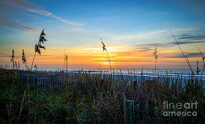 Sea Oats Sunrise Poster