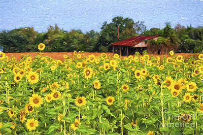Sea Of Sunflowers Poster by Bonnie Barry