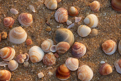 Sea Shells At Sunset Poster
