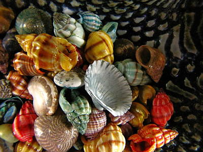 Poster featuring the photograph Sea Shells by Lori Miller