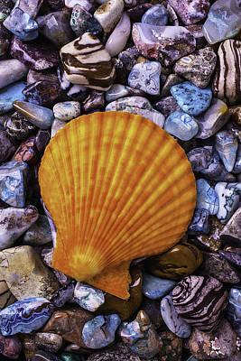 Sea Shells On Colorful Rocks Poster