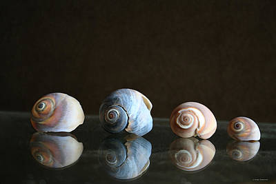 Sea Snails Poster by Linda Sannuti