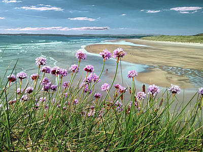 Sea Thrift Wild Flowers - On The Cliff Edge Above Tullan Strand Poster