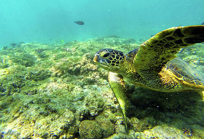 Poster featuring the photograph Sea Turtle #2 by Anthony Jones