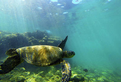 Poster featuring the photograph Sea Turtle #5 by Anthony Jones