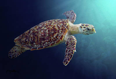 Sea Turtle Poster by Kathie Miller