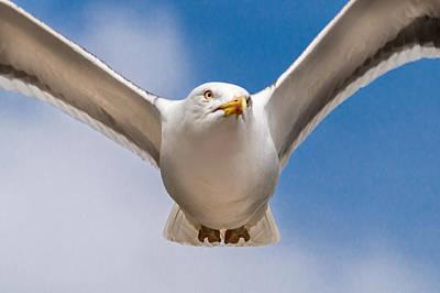 Seabird Closeup Poster