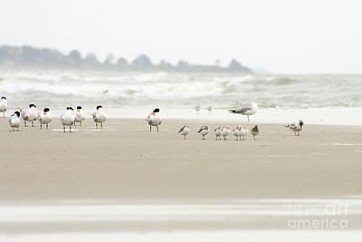 Seabirds On Hilton Head Shoreline Poster by Angela Rath