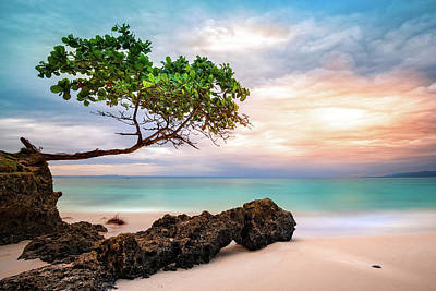 Seagrape Tree Poster