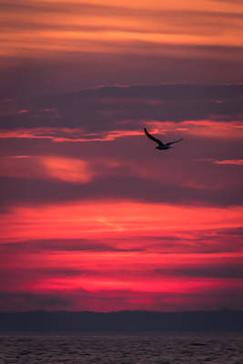 Seagull Flying At Sunset Jersey Shore Poster