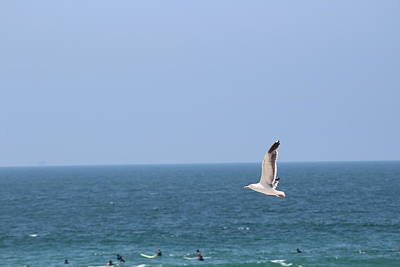 Seagull Flying Over Huntington Beach Poster