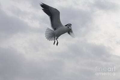 Seagull Hovering Overhead Poster by John Telfer