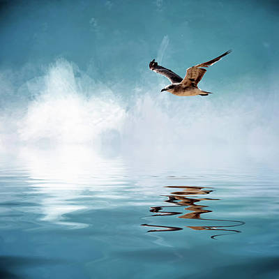 Seagull In Flight Poster by Cyndy Doty