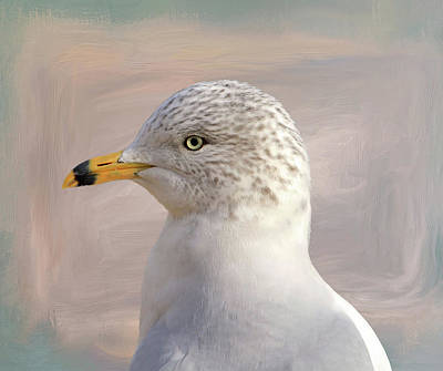 Seagull Portrait Poster by Donna Kennedy
