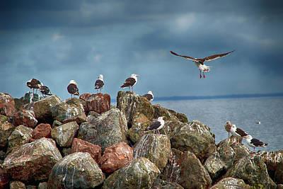 Seagull Rocks Poster